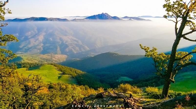 پوشش گیاهی پارک ملی کیاسر
